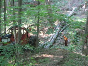 Workers remove fallen trees from the original Pastoral Walk in 2014.